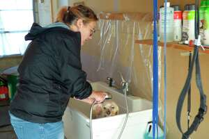 Kate Lippert, owner of The Groomery a pet salon in Onekama, washes one of her clients. Lippert will host an open house and provide helpful tips for dog owners starting at noon on Sunday. (File Photo)