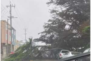 A downed tree on Lower Great Highway in San Francisco on Oct. 24, 2021.