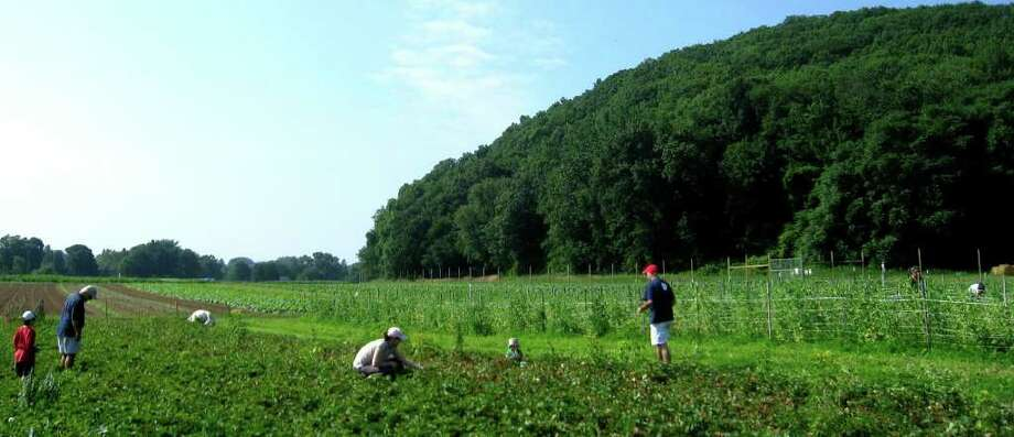 SPECTRUM/Area residents harvest produce from the fields at Fort Hill FFarm in New Milford, July 2010 Photo: Norm Cummings / The News-Times
