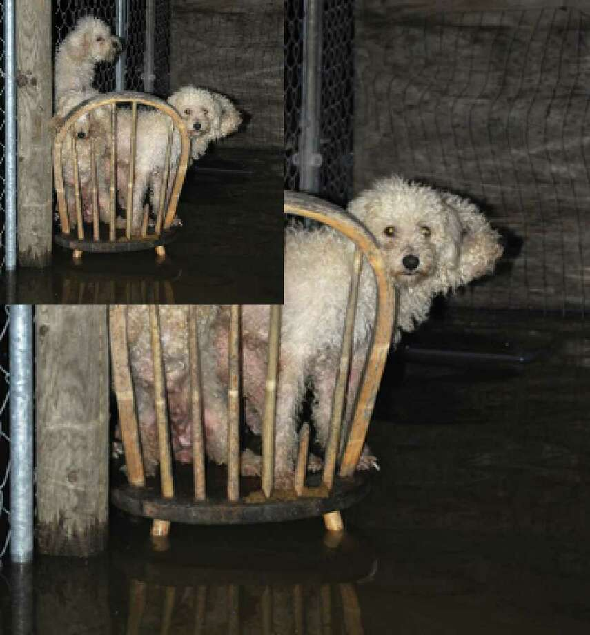 The dogs pictured were found abandoned with no food or drinking water  at a San Benito area colonia.