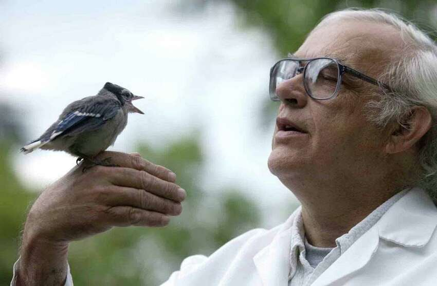 Department of Environmental Conservation pathologist Ward Stone examines a 3- 1/2-week-old blue jay June 29, 2004, at the Wildlife Resources Center in Bethlehem. (Times Union archive)