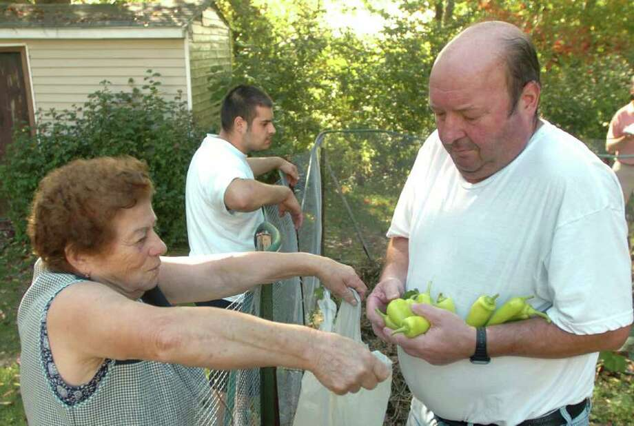 Maria Narcisco holds a bag for Manuel Peralta, after picking peppers from his garden. Michael Peralta, 24, stands in rear at their home in Danbury, Sept. 29, 2010. Photo: Chris Ware / The News-Times