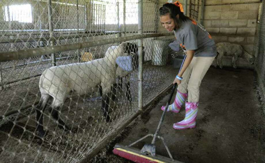 Reanna Witherspoon tends to pigs and a lamb in the agriculture program at Burbank High, which would see upgrades under the bond proposal.