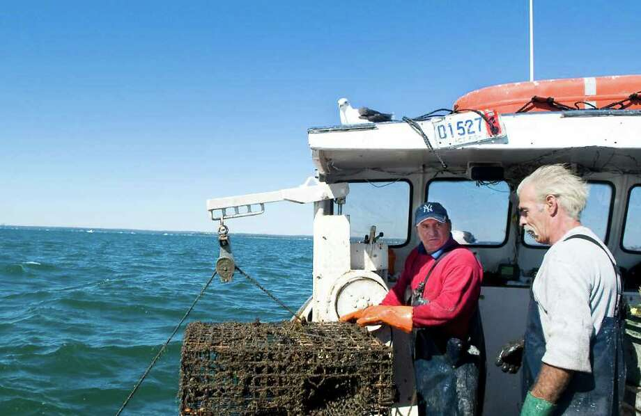 Roger Frate hauls his lobster traps on Long Island Sound with Roy Dickhart aboard Frate's 35 ft. Duffy lobster boat in Stamford, Conn. on Friday October 8, 2010. Photo: Kathleen O'Rourke / Stamford Advocate