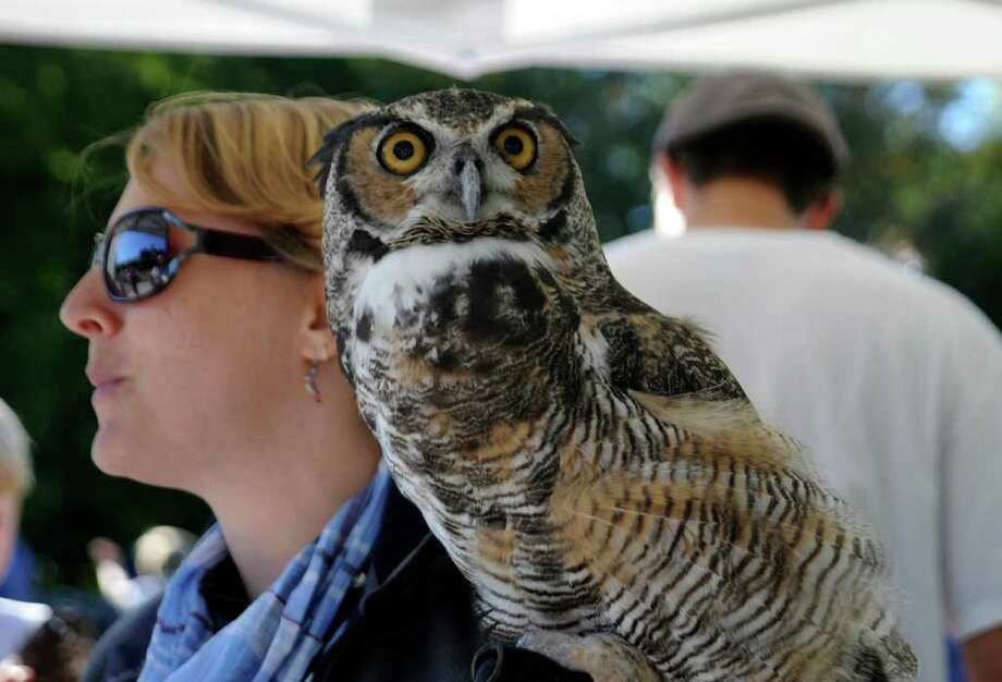 Melanie Pearson, director of animal care at New Canaan Nature Center holds Socrates, a great horned owl at Audubon Greenwich's 12th Annual Hawk Watch Festival and Green Bazaar, on Sunday, Oct. 10, 2010. Photo: Helen Neafsey / Greenwich Time