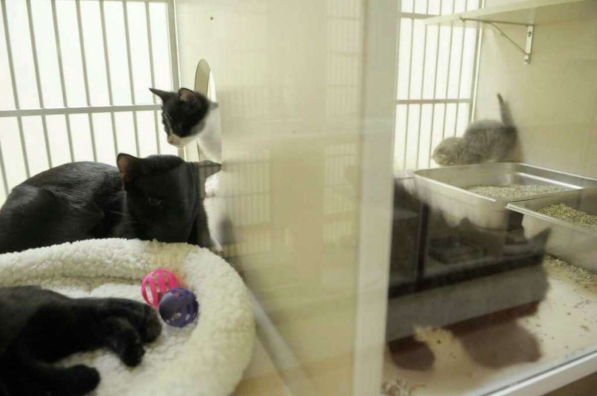A mother cat and her kittens at the new Saratoga County Animal Shelter in Milton, NY on Thursday, Oct. 7, 2010. The new shelter is a huge improvement over the older facility. The cat cages are two rooms, one for the litter box and then another room for their food and sleeping area. (Paul Buckowski / Times Union)