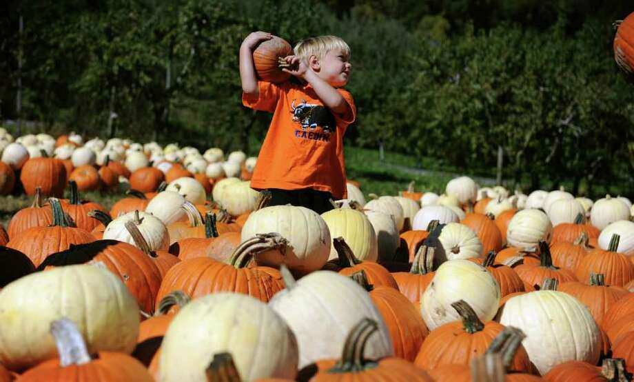 Four-year-old Caedin Sikora, of Darien, finds his perfect pumpkin Friday Oct. 8, 2010 at Silverman's Farm in Easton. Photo: Autumn Driscoll / Connecticut Post