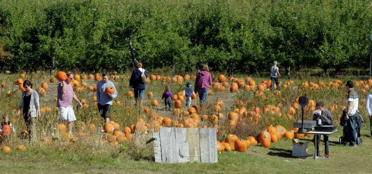 People pick out pumpkins in the pumpkin patch at the 22nd annual Goold Orchards Apple Festival and Craft Show in Castleton, on Sunday. The orchard is also celebrating its 100-year anniversary. (Paul Buckowski / Times Union)