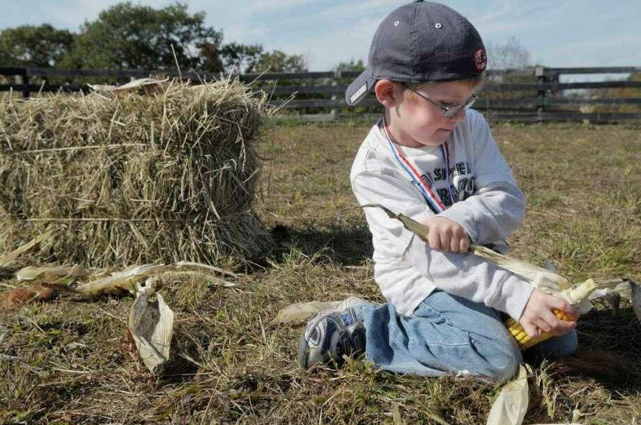Sean Donovan, 4, from Slingerlands, works at tearing the husk off of an ear of corn in the corn shucking race, part of the Family Farm Olympics  at Liberty Ridge Farm in Schaghticoke, NY, on Monday, Oct. 11, 2010.    (Paul Buckowski / Times Union) Photo: Paul Buckowski / 00010607A