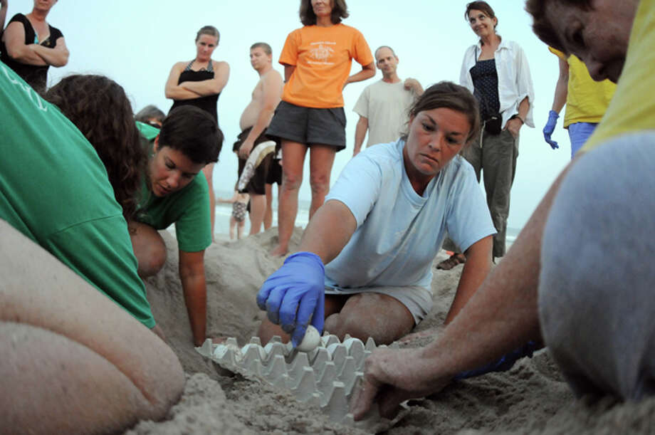 In this photo taken Aug. 31, 2010, Jody Smith, with the Pleasure Island Sea Turtle Project, removes sea turtle eggs from a nest in order to relocate the nest away from the water at Kure Beach, N.C. The Pleasure Island Sea Turtle Project relocated one nest and excavated another because they may be threatened if Hurricane Earl makes landfall. (AP Photo/The Wilmington Star-News, Mike Spencer) / 2010