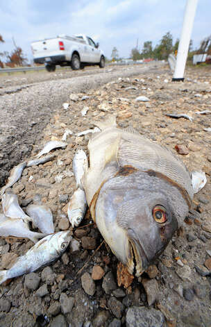The fetid smell of dead fish permeated the air in many of the flooded areas of Orange County. Guiseppe Barranco