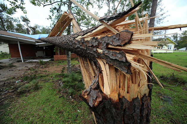 Violent hurricane-force winds splintered this pine tree, sending it crashing onto a nearby home.  Guiseppe Barranco