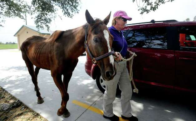 Ethel Spence of the Humane Society unloads an emaciated horse rescued from Helbig Street. Hundreds of animals abandoned or set loose by the storm ended up at the Humane Society of Southeast Texas, where they were evaluated and treated. Those not claimed were distributed to no-kill shelters across the country. Tammy McKinley
