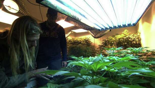 "A new documentary about marijuana growers in California - ""Cash Crop"" - is opening at the Criterion Cinemas in New Haven on Friday. Photo: Contributed Photo / Connecticut Post Contributed"