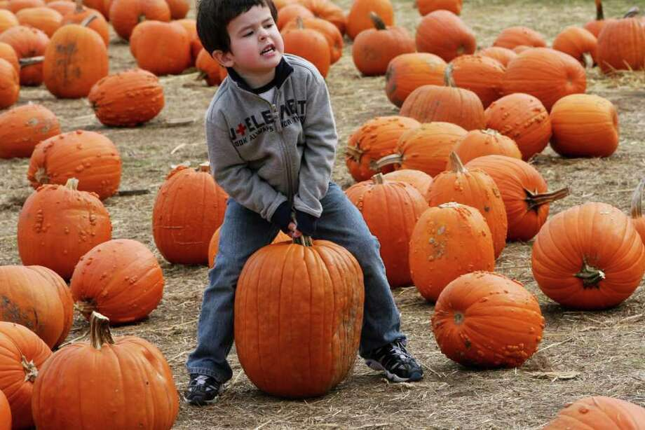 Andre Black, 4 of NY,  tries to lift a pumpkin at the Jones Tree Farm UNICEF Family Festival on Sunday, October 24, 2010. Photo: B.K. Angeletti / Connecticut Post