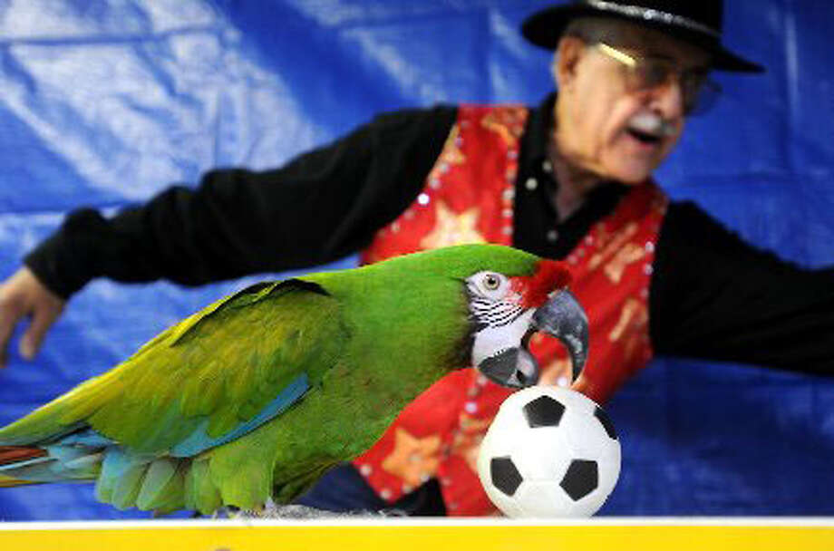 Sonny Carlin encourages one of his many exotic birds to play soccer in Nederland. Tammy McKinley/ The Enterprise