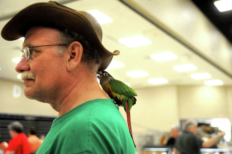 Yellowside Conure, Lucas plays on the neck of Thomas York during the Triangle Bird Club Show at the Port Arthur Civic Center in Port Arthur, Saturday. Tammy McKinley/ The Enterprise