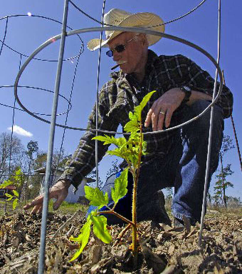 Jim Frasier checks a row of freshly planted tomato plants behind his home. Frasier, who is retired, grows blueberries, pinto beans, onions, corn, potatoes, etc. to sell at local farmer's markets. Dave Ryan/The Enterprise