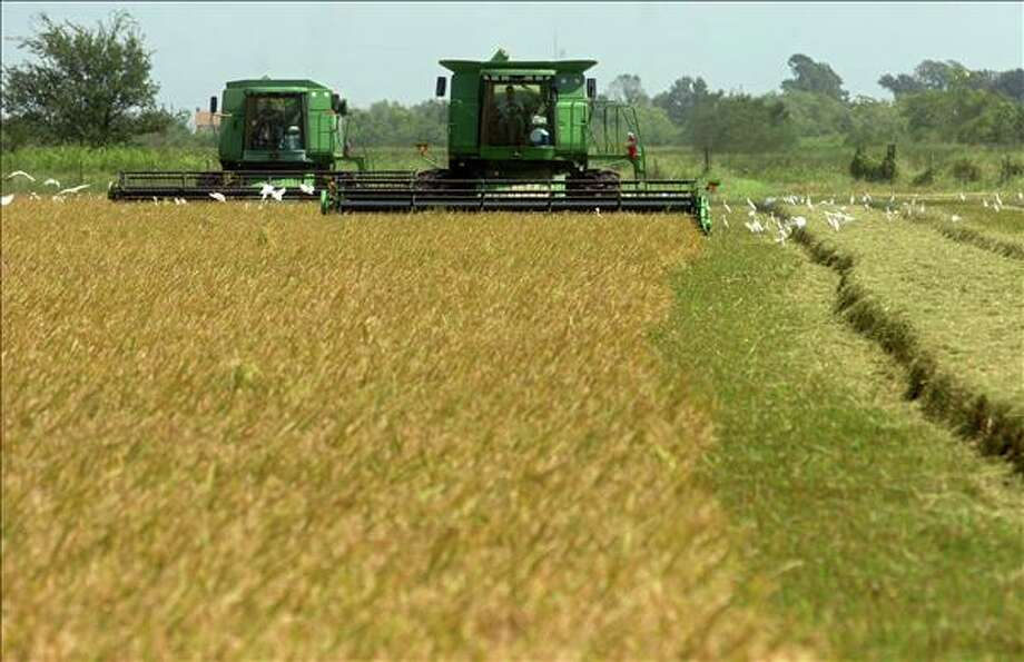 Rice farmers who had their fields submerged in salt water in Hurricane Ike are planting their fields again. Many are following the lead of Louisiana farmers whose fields were damaged in hurricanes Katrina and Rita and who waited about two years to plant.  Enterprise file photo