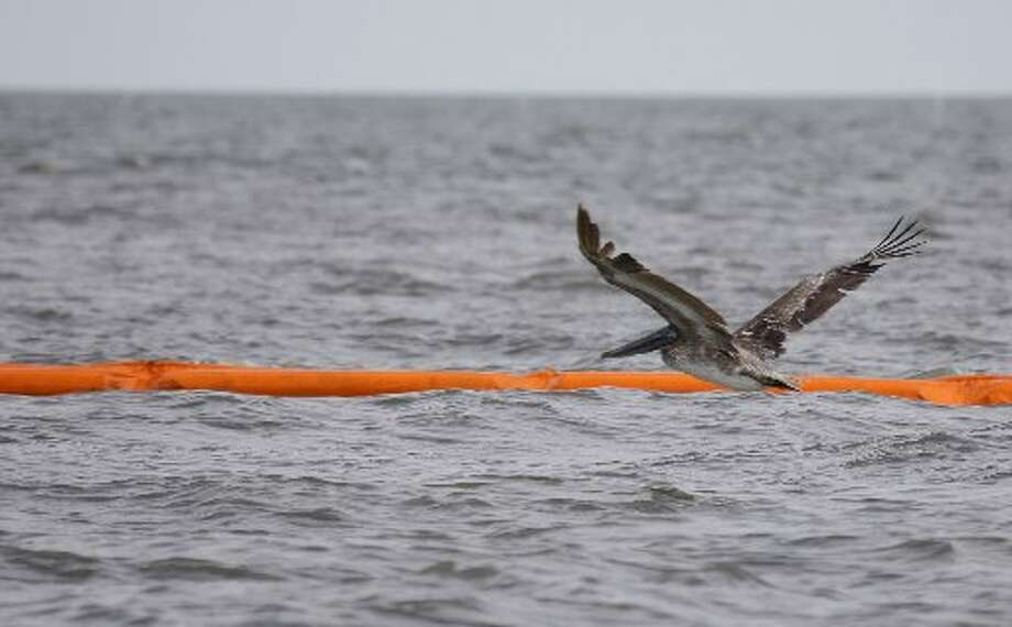 A brown pelican flies past containment boom at Catfish Pass in Breton Sound on Monday as efforts continue to protect the fragile Louisiana marshes from the Deepwater Horizon oil spill. A large number of responders and equipment from SE Texas went to Louisiana to help remove the oil, leaving the Texas coast vulnerable if something were to happen here. ( Melissa Phillip / Houston Chronicle )