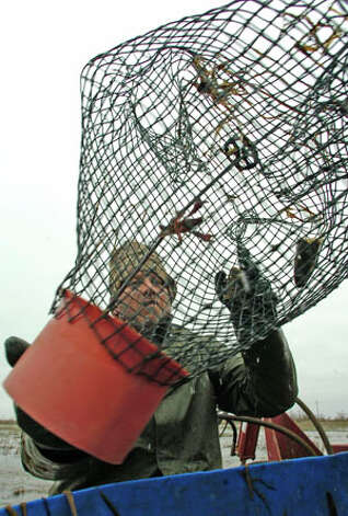 Brian Fischer, co-owner of Texas Crawdaddy's Inc.  look at another trap that contained one crawfish.  This is the worst year for crawfish in 20 years.  The cold weather has kept them inside their holes and the crawfish farms have missed two of their biggest sales of the year. Dave Ryan/The Enterprise