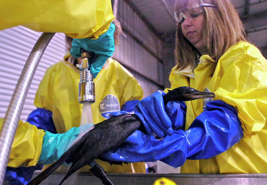 Linda Holmes, left, and Stacey Huffman, both of Wildlife Response Services LLC, wash a Neotropic Cormorant that was covered in oil following an oil spill Saturday in the Sabine Neches Waterway.Dave Ryan/The Enterprise / Beaumont