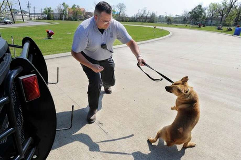 After spotting a dog roaming Pine Street, Beumont Animal Control Officer Stoney Brooks captures the stray dog using just a leash. Valentino Mauricio/The Enterprise