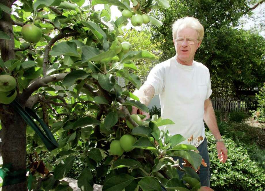 """Actor Ed Begley Jr. stands next to an apple tree, one of several fruits and vegetables he grown at his home in the Studio City district of Los Angeles Thursday, May 15, 2008.  Begley and his neighbor Bill Nye, the host of the educational series """"Bill Nye, The Science Guy,"""" who moved in two doors away two years ago, are locked in a friendly but serious eco-battle of keeping up with each other. The two moderately famous and occasionally geeky environmentalists vie to see who can leave the smaller carbon footprint. (AP Photo/Reed Saxon) / AP2008"""