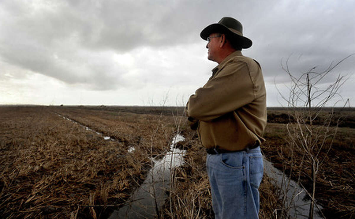 Mark Schultz looks over his damaged rice fields after Hurricane Ike flooded the fields with salt water in Anahuac, Saturday. Tammy McKinley, The Enterprise