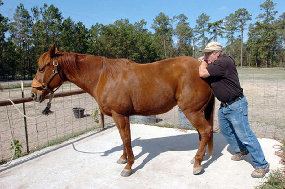 Equine Adjuster Straightens Horses Out Beaumont Enterprise