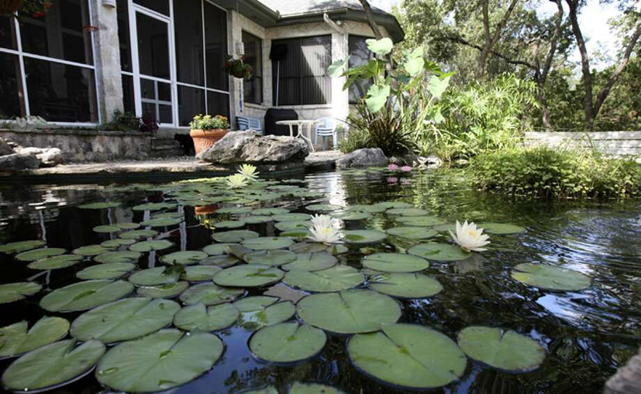 Bruce Cotter has a lily pond in his backyard in addition to a front yard filled with bluebonnets, allowing him to follow through on his vow to give up mowing.