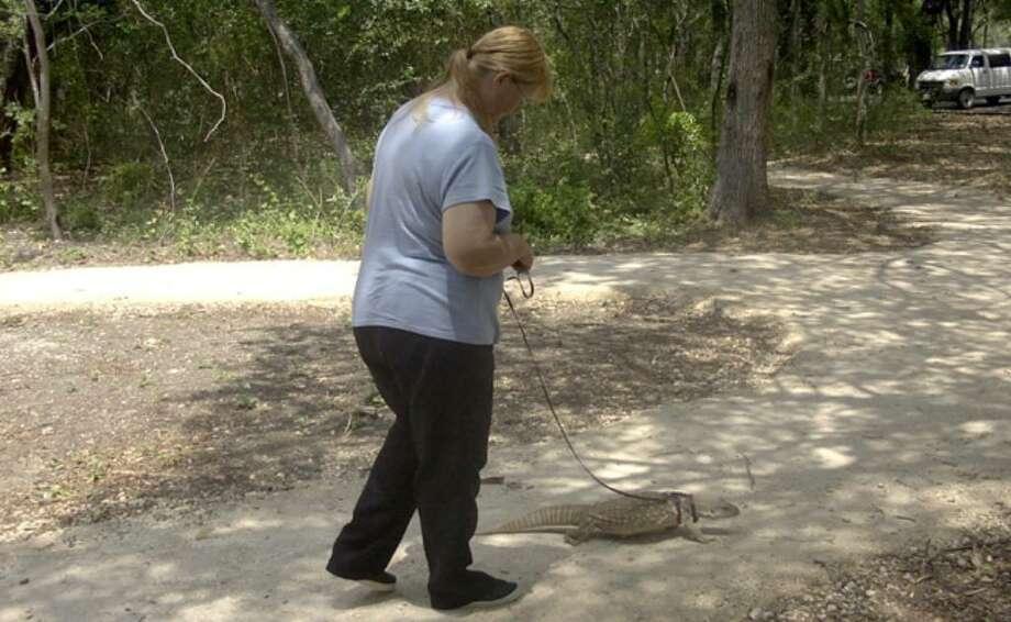 Teresa Shisk-Saling walks Computer, her savannah monitor. She is a veterinary technician at Texas A&M University.