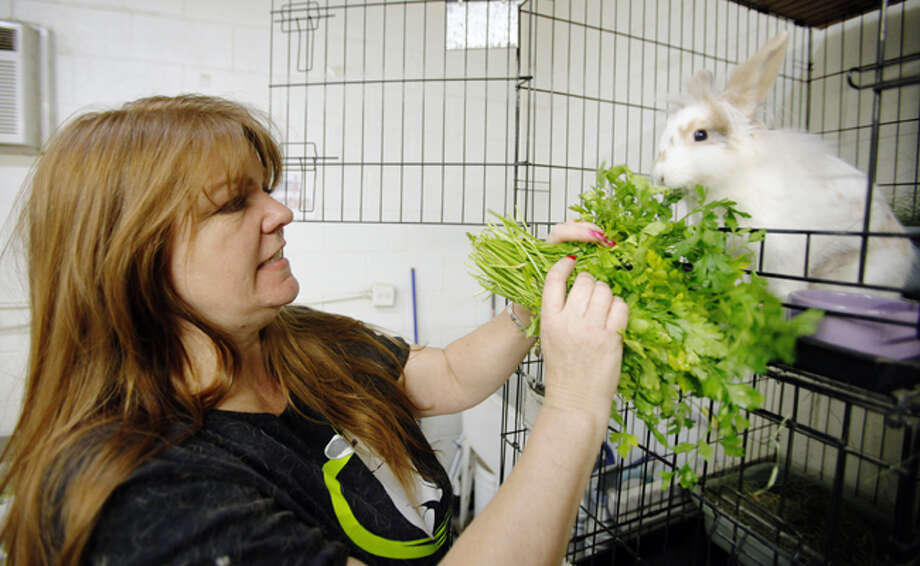 Caroline Charland, founder of The Bunny Bunch, feeds rabbits at The Burrow in Montclair, Calif. The number of rabbits in shelters across the country goes up every summer because Easter bunnies grow up and the novelty wears off. Or people want to go on vacation and can't be bothered with rabbits.