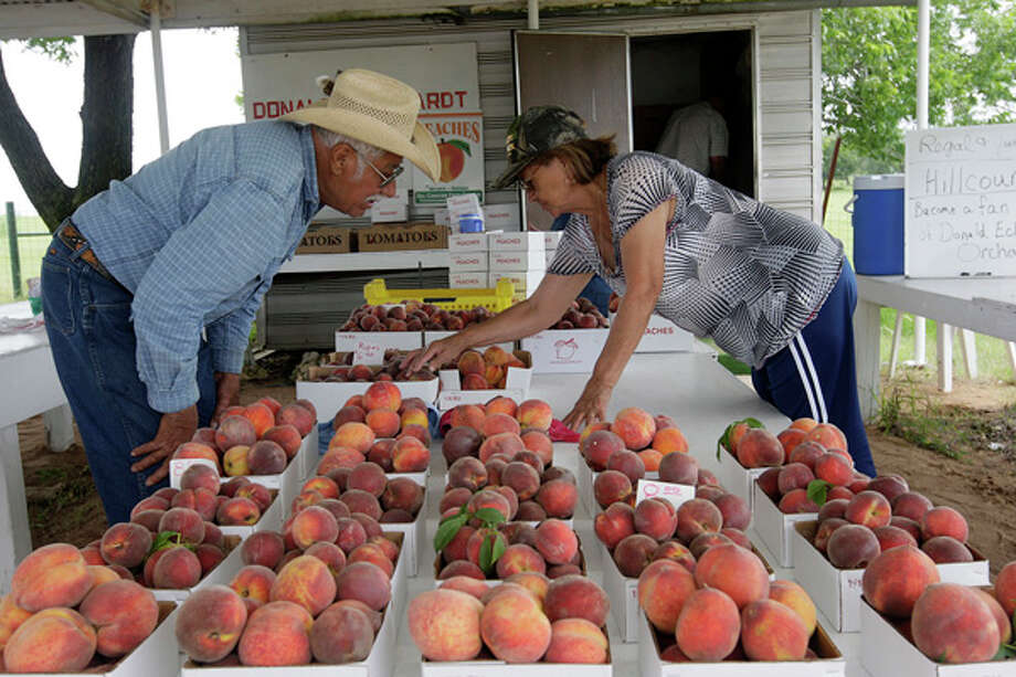 Roman and Lupe Castro, from Big Spring, Texas, look over peaches available at the Donald Eckhardt Orchards stand on Highway 87 just west of Fredericksburg, Thursday, June 3, 2010. The Hill Country peach season started in late May and will continue through August. With abundant rain and a cold winter, growers are expecting a good year. / glara@express-news.net