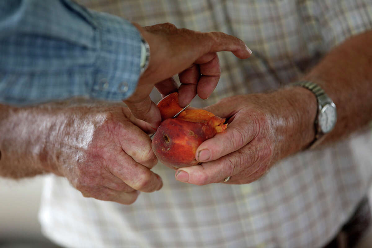 Donald Eckhardt give samples of his peaches to customers at a roadside stand just west of Fredericksburg.