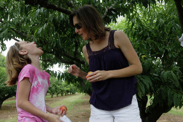 Riley Smith, 9, left, reacts after picking a not-so perfect peach at the Marburger Orchards. With Smith is Stacey O'Quinn. / glara@express-news.net
