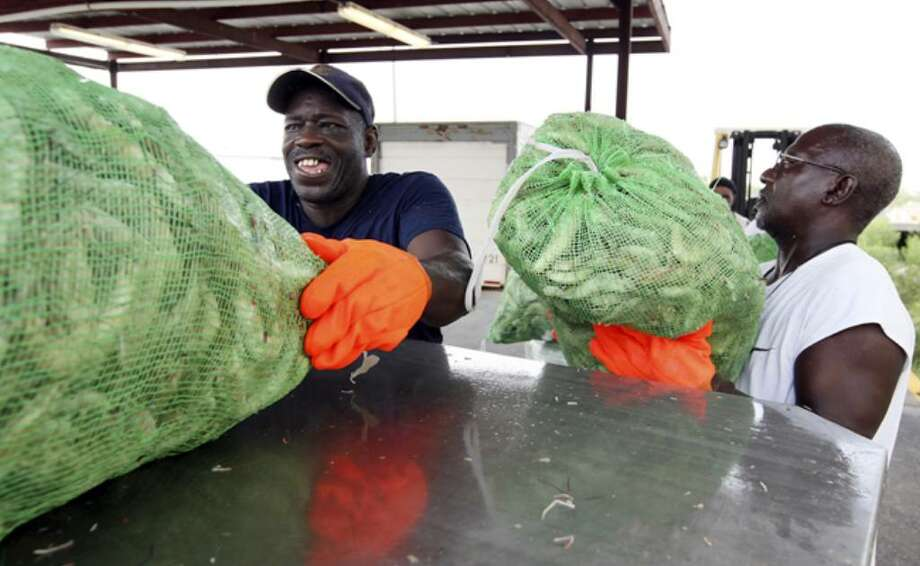 Dockworkers Robert Harris, 56 (left), and Robert Moultrie, also 56, unload bags of gulf shrimp in Biloxi, Miss.