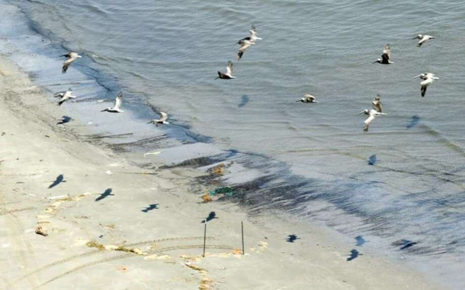A flock of pelicans fly over black crude oil from the Deepwater Horizon spill in Caminada Pass at Elmer's Island on the Louisiana gulf coast. Biologists say oil has smeared at least 300-400 pelicans and hundreds of terns in the largest seabird nesting area along the Louisiana coast — marking a sharp and sudden escalation in wildlife harmed by the spill.