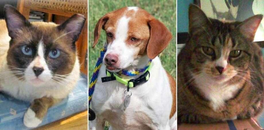 From left: Yogi, Porgie and Mama