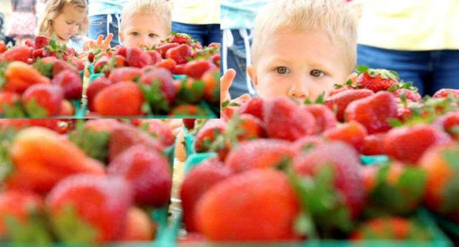 Braeden McCourt, 2, eyes baskets of the Poteet Strawberry Festival's namesake treat.