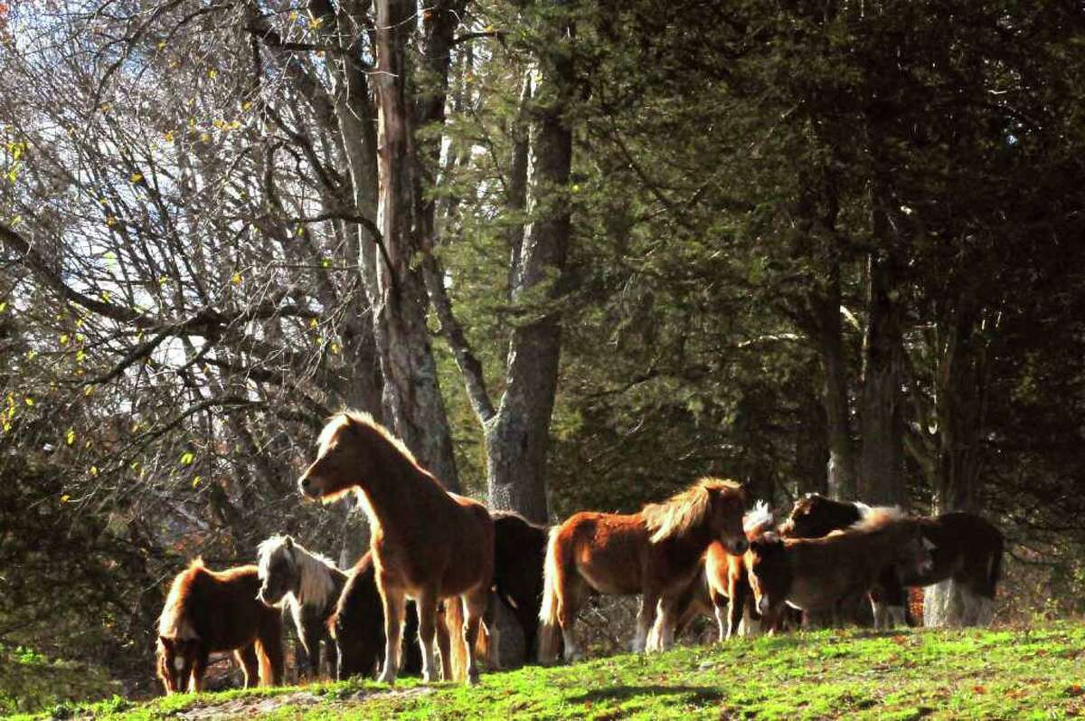 Horses recued from a Wisconsin farm graze on a hill at the Catskill Animal Sanctuary in Saugerties. ( Michael P. Farrell/Times Union