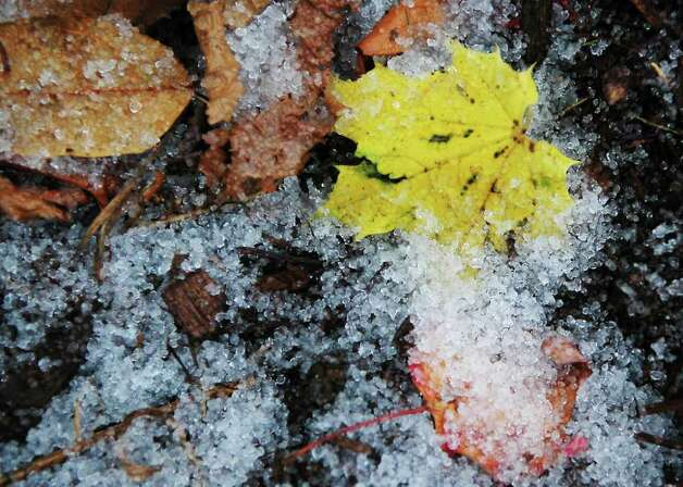Fall and winter mix as sleet covers the fallen leaves in a morning storm on Monday November 8, 2010. Photo: Cathy Zuraw / Connecticut Post staff photographer