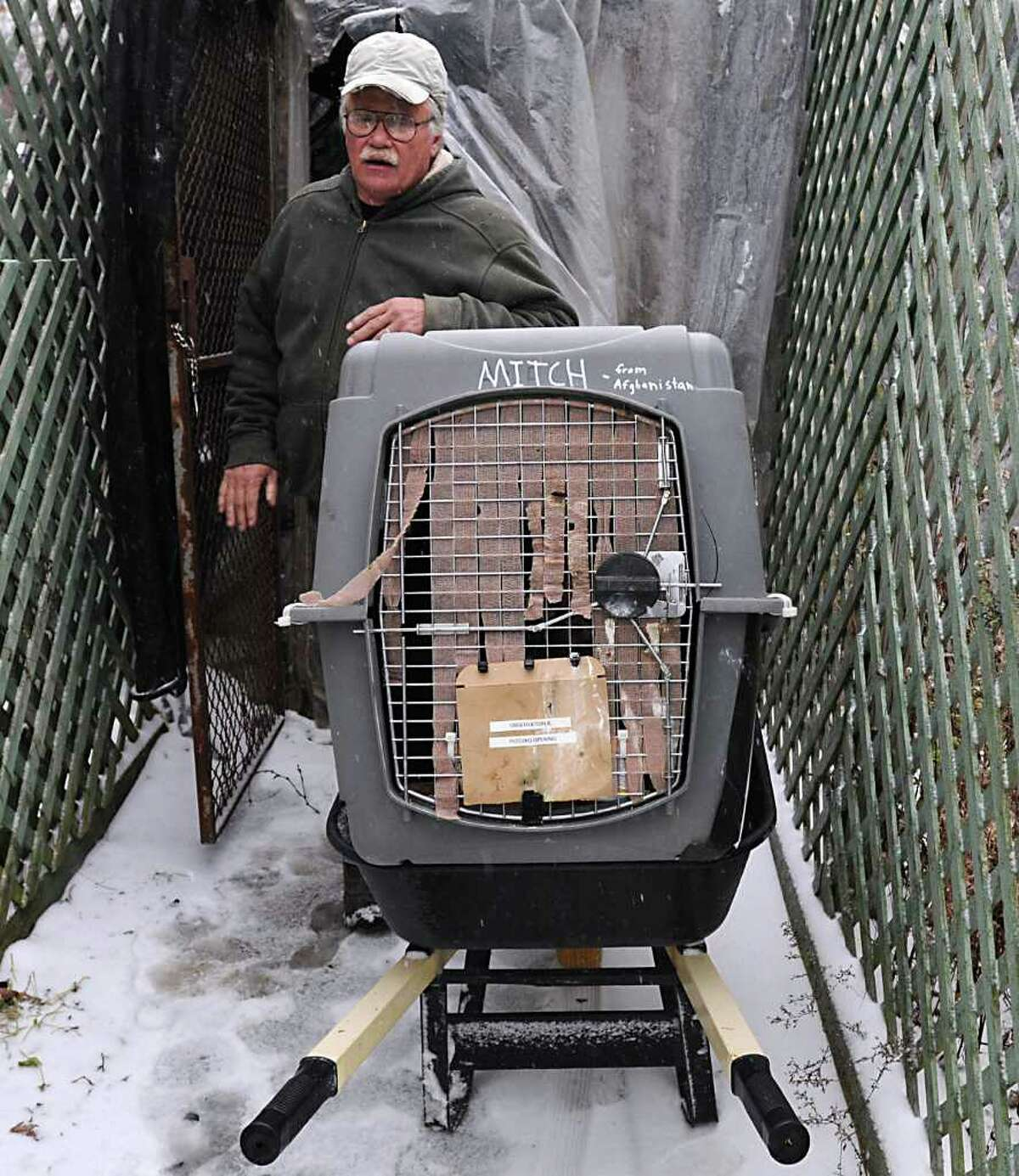 Pete Dubacher wheels Mitch, the wounded steppe eagle from Afghanistan who Navy SEALs nursed back to health, to his new living quarters at the Berkshire Bird Paradise Sanctuary in Petersburgh, NY, on November 8, 2010. (Lori Van Buren / Times Union)