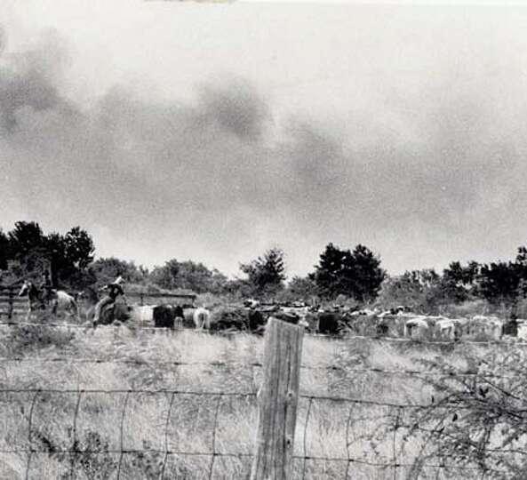 Cattlemen near Sabine Pass work to get their stock to higher ground.