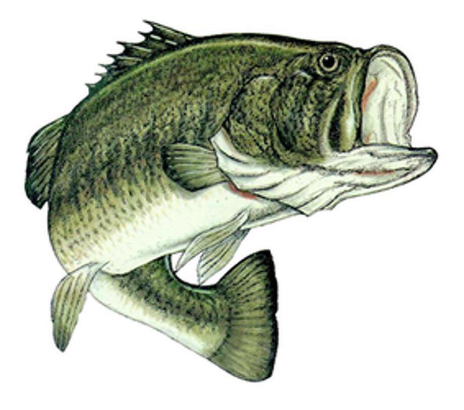 Largemouth bass / Beaumont