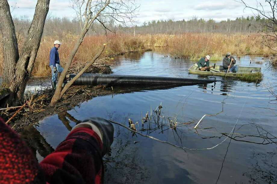 """From left, volunteer Frank Berlin holds a rope to a rowboat as Mike White, Andy Fyfe and Geoff Borneman secure pipes over a beaver dam along side the Bog Meadow Trail in Saratoga Springs. The volunteers are using a """"beaver baffler"""" to try to stop flooding along the trail off Route 29.    (Lori Van Buren / Times Union) Photo: Lori Van Buren"""
