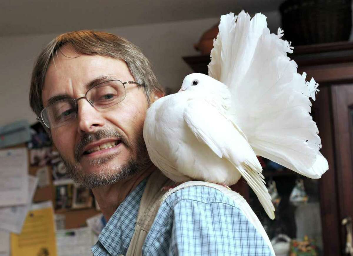 Malcolm Ford of Bethel shows one of about 50 fantail pigeons that he raises. Photo taken Tuesday, Nov. 16, 2010.