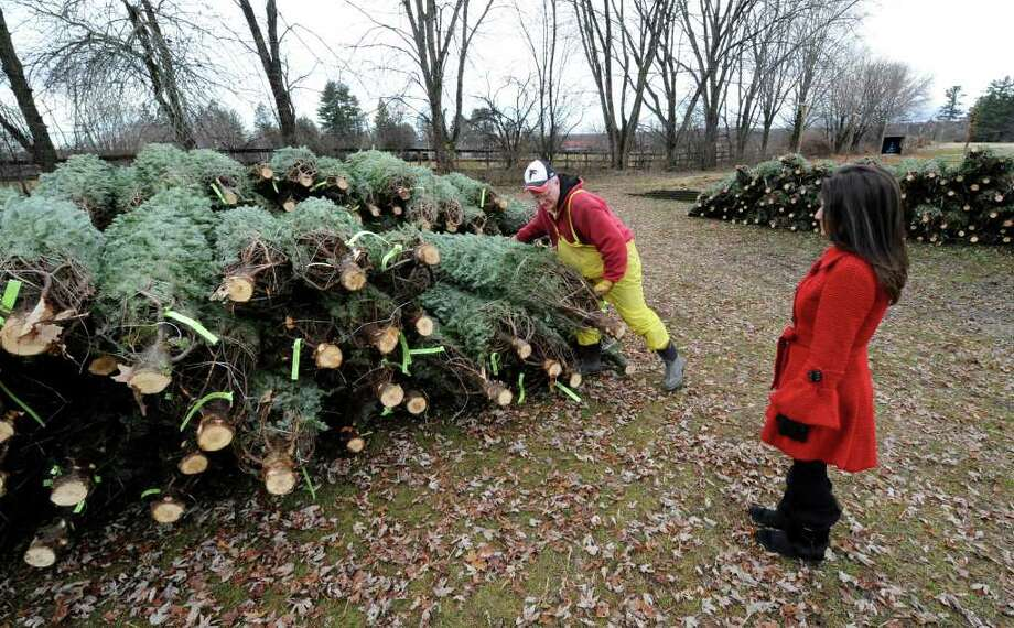 Kelly Garvey has Ned Chapman of Sunnyside Gardens in Saratoga Springs assist in picking the perfect tree for this Christmas season November 26, 2010. (SKIP DICKSTEIN / TIMES UNION) Photo: Skip Dickstein / 2008