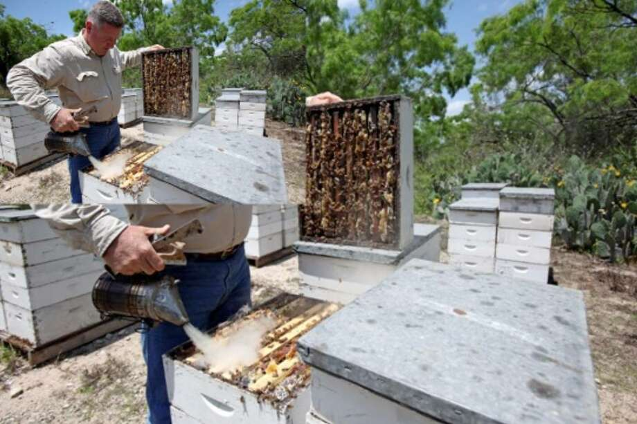 "Todd Youngblood, president of the Texas Beekeepers Association, tends to bee hives at one of his ""bee yards"" on a large ranch just west of Pearsall."