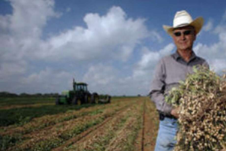 Peanut farmer Lonnie Rakowitz shows some of his peanut crop on his farm near Jourdanton. He and other peanut farmers are hoping that their fortunes will improve in 2010. He estimates he'll make $30,000 less this year than he did in 2008.